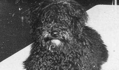 annie chien mascotte sous-marin flore
